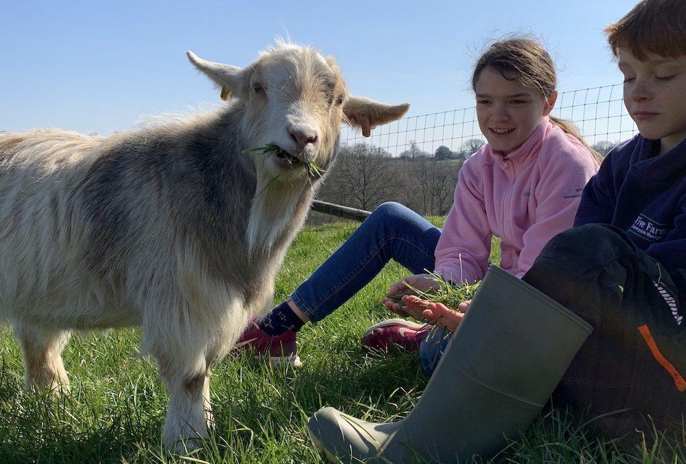 We got goats